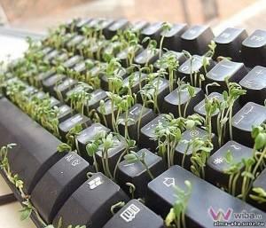 клумба клавиатура